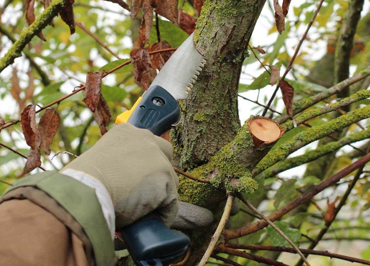 Comment élaguer un arbre et à quel moment