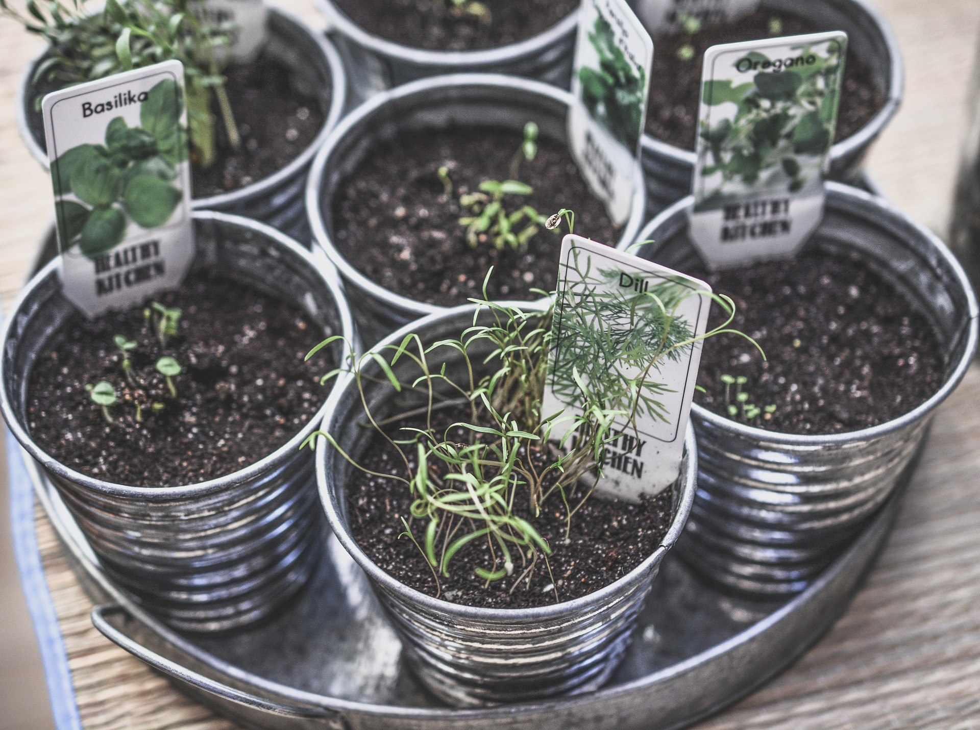 Comment multiplier vos plantes aromatiques