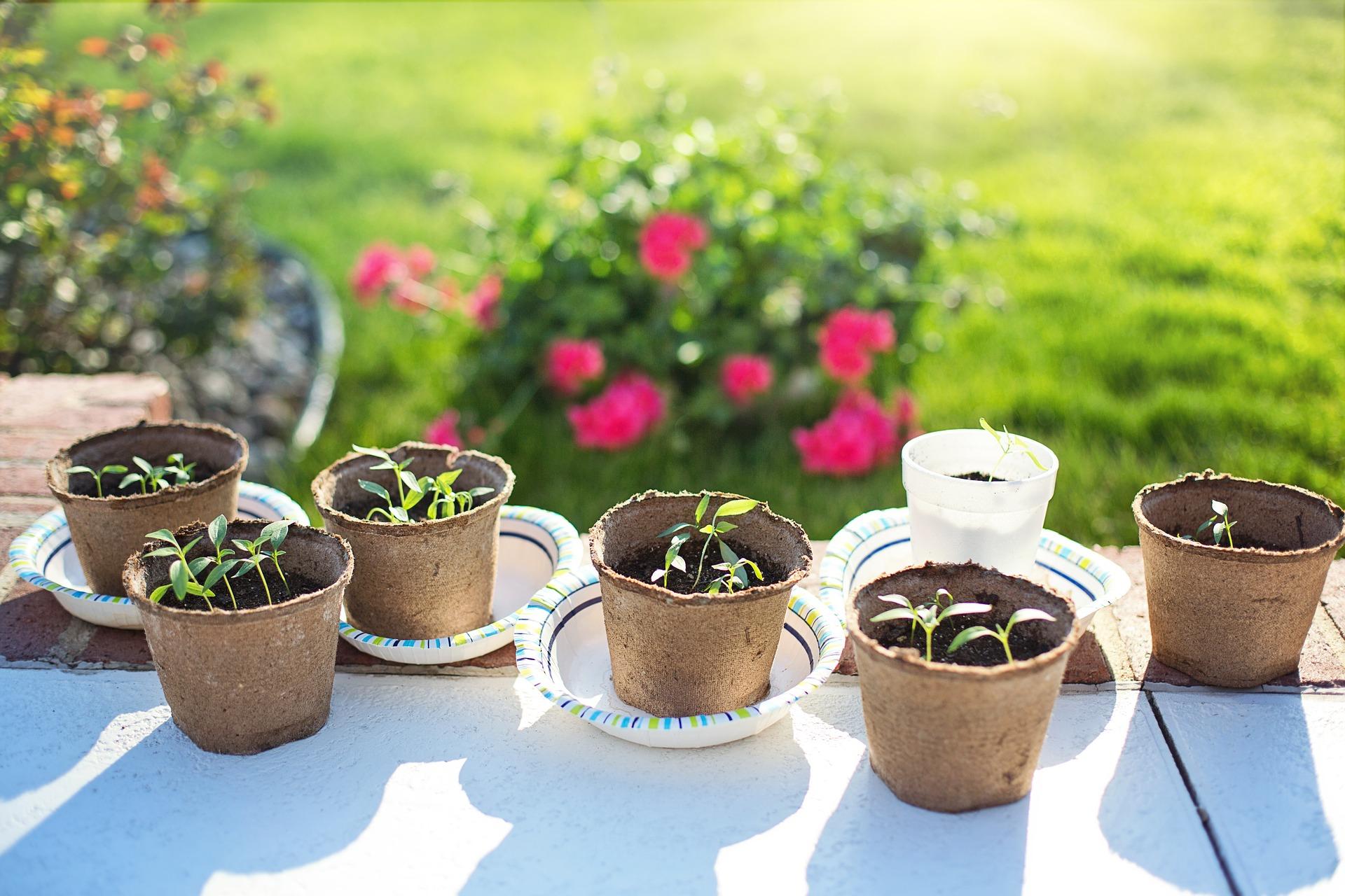 Comment préparer vos semis en intérieur ?