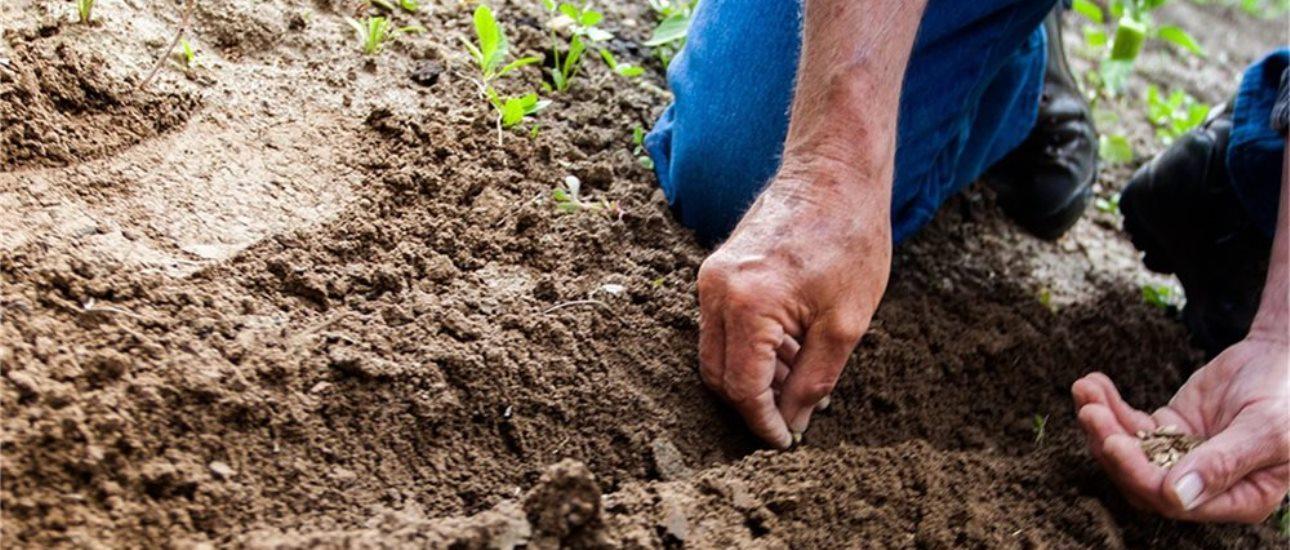 Découvrez les différentes techniques de semis