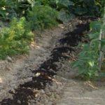 Préparez votre potager dès l'automne pour le printemps