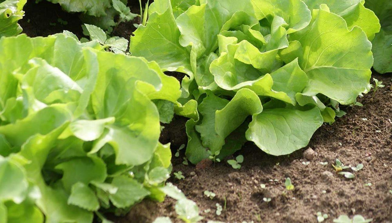 Que faire au potager et au jardin en juillet